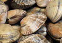 cancro cozze vongole molluschi