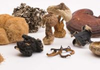 tipi di funghi per micoterapia